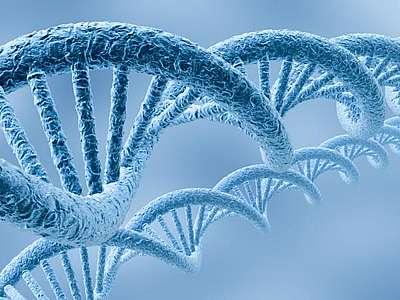 Алкоголь мутирует ДНК